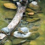 Turtle Inn Foto