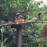 Toucan's at our feeder