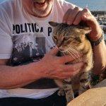 On of Deja Vus cats