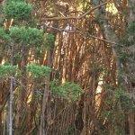 Foto de Cau Cau- Isla Victoria y Bosque de Arrayanes