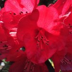 Foto di Mendocino Coast Botanical Gardens
