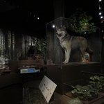 Foto de Harvard Museum of Natural History