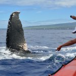 My wife is pointing to the other whale under the boat when the last one fluked up in front of he