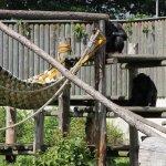 Photo of Tallinn Zoo