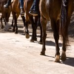 Horseriding - we group people by experience level so everyone has a great time.