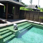 the pool at the villa