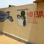 Photo of Kosgoda Sea Turtle Conservation Project