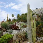 cacti and succulents in the Exotic Gardens
