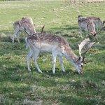 A walk through the Deer Park