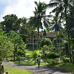 Cottages set in a lush tropical garden