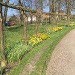Daffodils in Lunds Botan