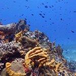 Beautiful, healthy reef.
