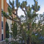 Photo de Best Western Joshua Tree Hotel & Suites