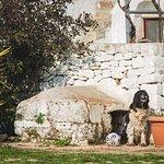 Photo de Agriturismo Masseria Ferri