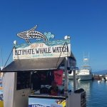 Ultimate Whale Watch