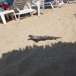 El Hotel esta repleto de fauna principalmente iguanas, ardillas y chachalacas.