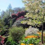 Beautiful spring flowers in bloom