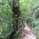Path to La Fortuna waterfall