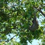 Foto de Tortuguero Wildlife Tour