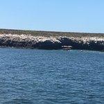 Photo of Crucero Bahia Alegre