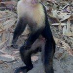 Foto de Curu National Wildlife Refuge