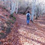 Foto de Parque Natural Hayedo de Tejera Negra