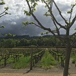 Duckhorn estate vineyard