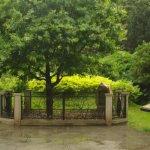QEII's oak tree.