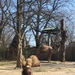 Foto di Roger Williams Park Zoo