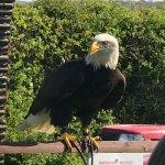 wonderful birds of prey
