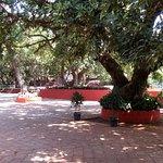 Foto di Citrus Chambers Mahabaleshwar