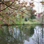 A beautiful water garden.