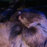 Foto de Amazon World Zoo Park