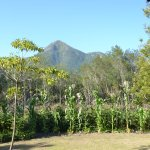 Tsitsikamma Mountain Range