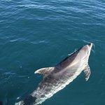 Dolfins visiting