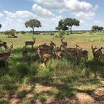 Photo of Game drives at Phalaborwa Gate in Kruger National Park