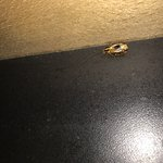 April 12, 2017 Roaches and used bloody tissue.  Found roaches in one room, changed rooms and had