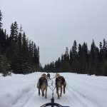 Photo of Kingmik Dog Sled Tours