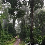 hiking Borneo