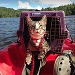 Tiberius at Julian Price Park Campground on the Kayak