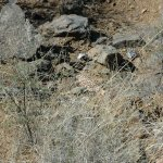 Look closely and see the gila monster!