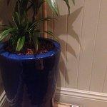 Interesting bric a brac behind plant in corner