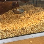 Fisher's popcorn is delicious