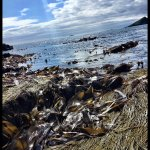 This is a great beach to go rockpooling with kids, they is masses to clear rockpools where you c
