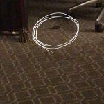 Mouse just walking around the room