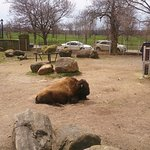 Photo of The Buffalo Zoo