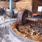 crushing roasted pinas