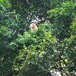 Monkey watch tour