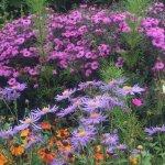Blooms of the Botanic Garden, Oxford in September 2015
