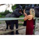 Feeding the resident elephants